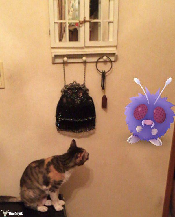 hayvanlar pokemon go görebiliyor 9