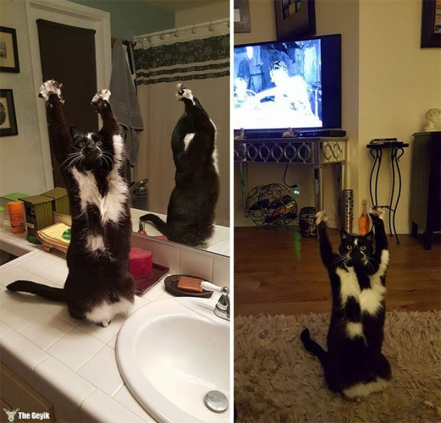 teslim olan kedi10