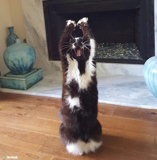 teslim olan kedi3