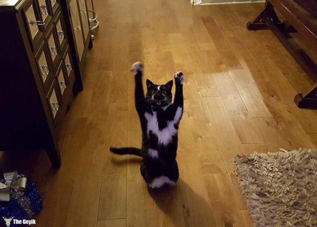 teslim olan kedi5