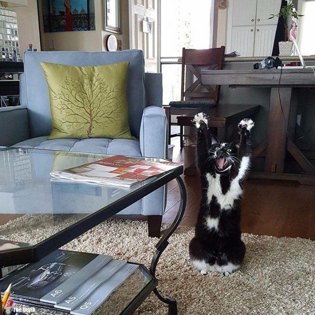 teslim olan kedi6