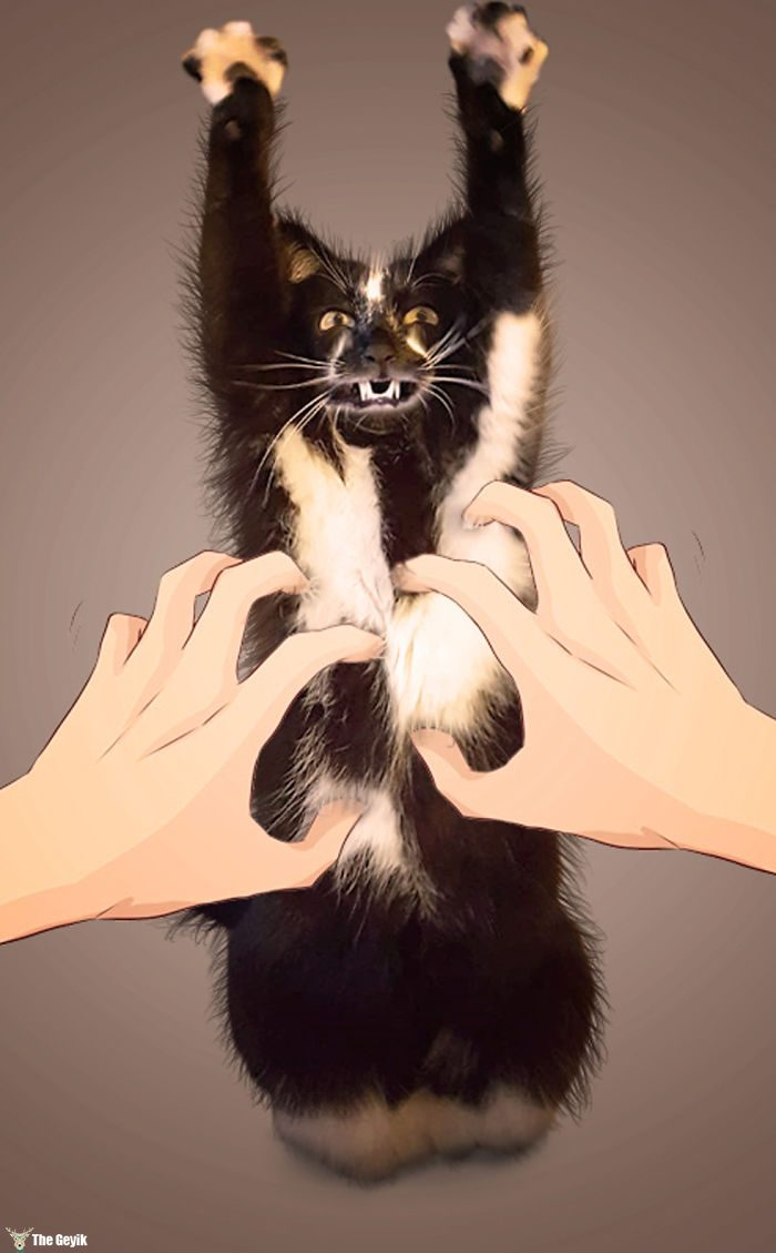 ayakta duran kedi komik photoshop battle 9