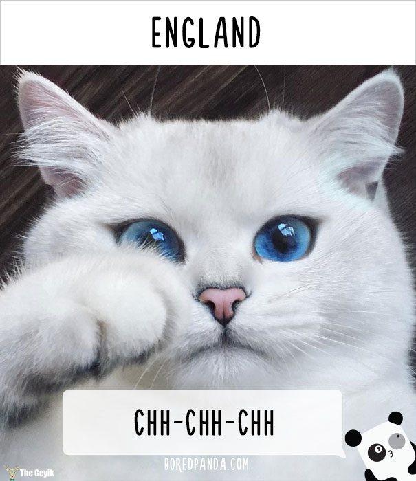 insanlar kedileri diğer dillerde nasıl çağırıyor 7