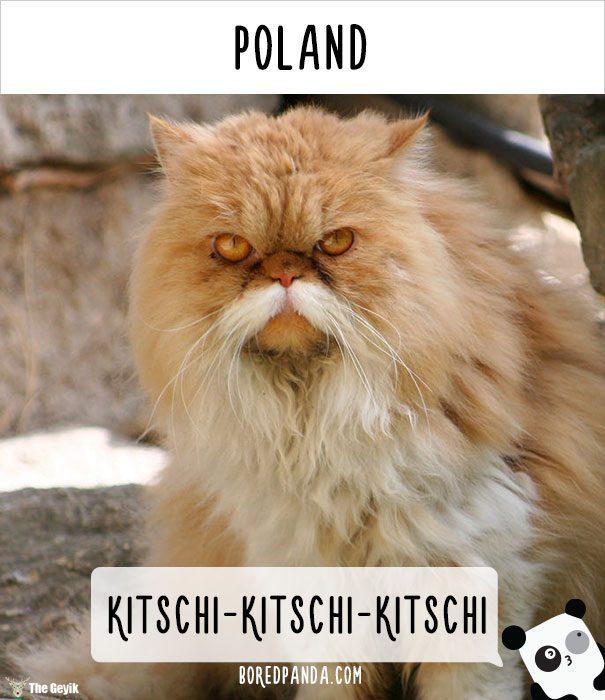 insanlar kedileri diğer dillerde nasıl çağırıyor 8
