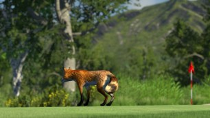 The Golf Club Wildlife