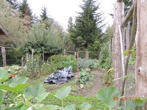 inside fully fenced  garden
