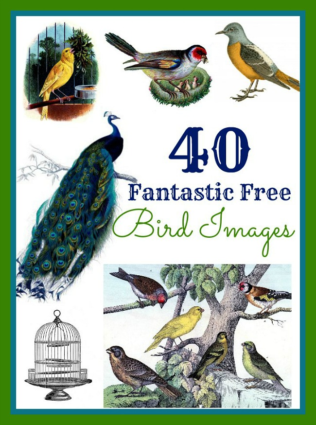 40 Best Free Bird Images!! - The Graphics Fairy