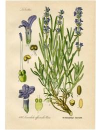 Botanical Print   www.imgkid.com - The Image Kid Has It!