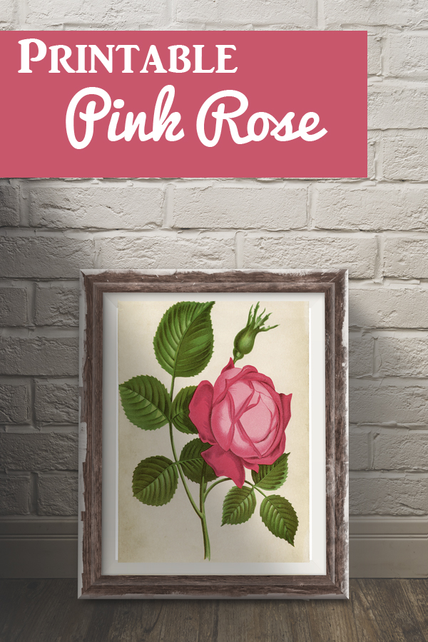 Gorgeous Pink Rose Picture Printable! - The Graphics Fairy