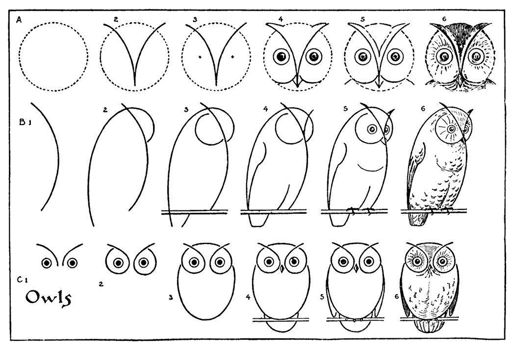 How to Draw an Owl - with Printable Worksheet - The Graphics Fairy