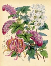 Flowers on Pinterest   Delphinium Bouquet, Flower Drawings ...