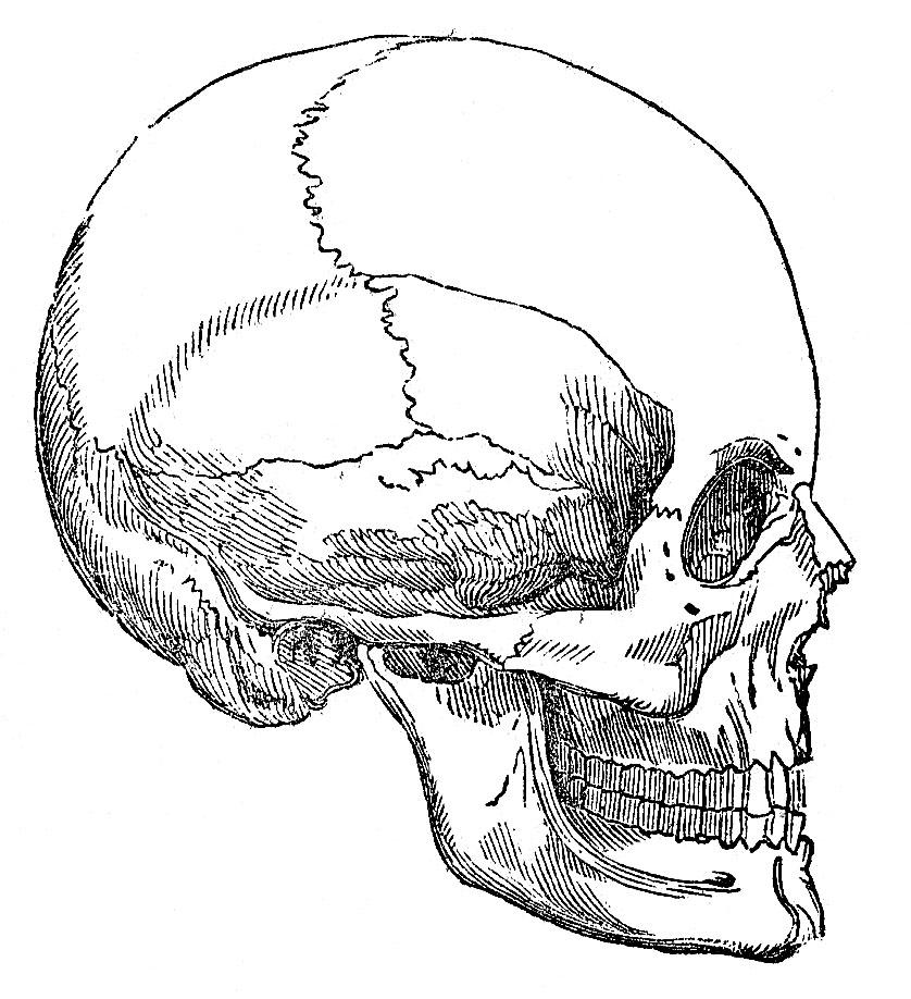 Human Skull Parts Labeled Label Skeleton Worksheets The Bones6 skull