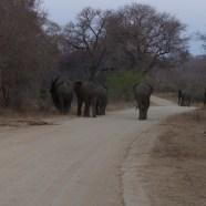 Exploring the Mpumalanga Lowveld
