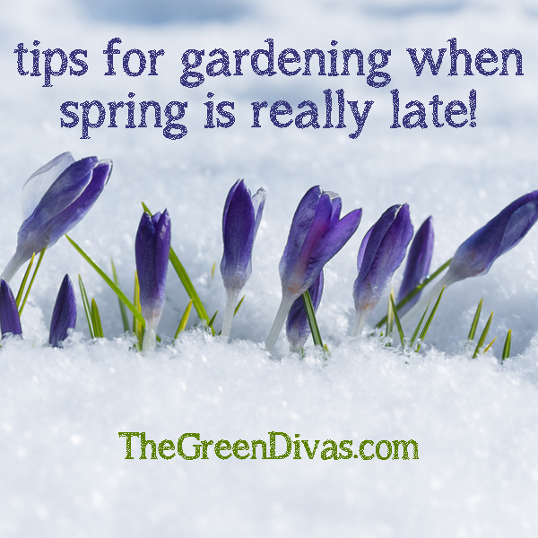 garden tips for a late spring