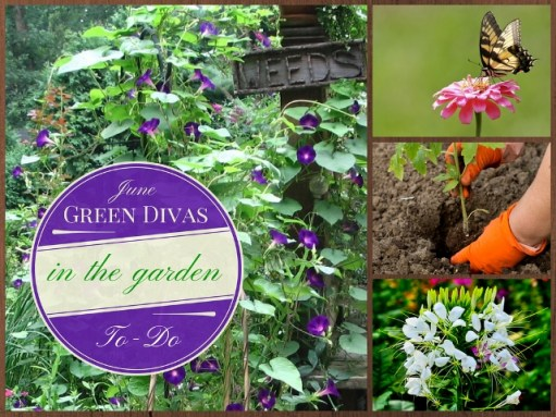 green divas june gardening IN the Garden (640x480)