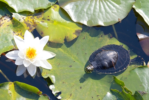 baby turtle flower