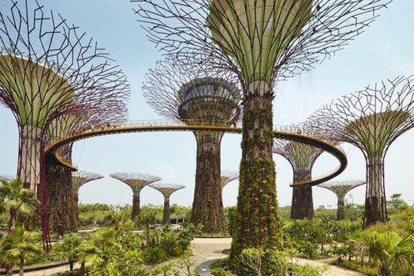 Singapore tree building green cities