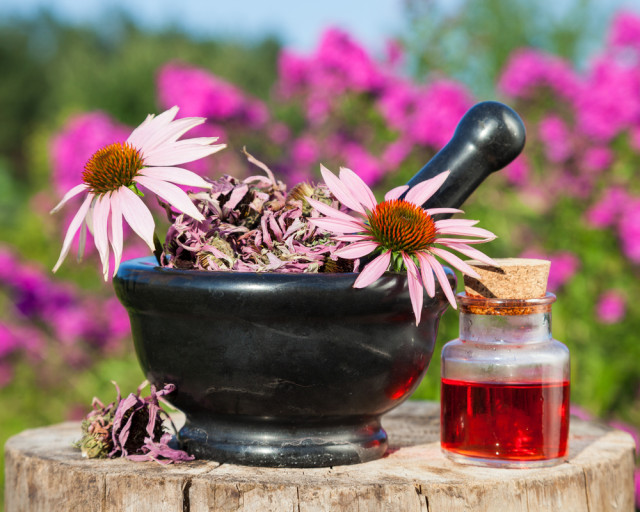 Echinacea and other exotic herbal remedies