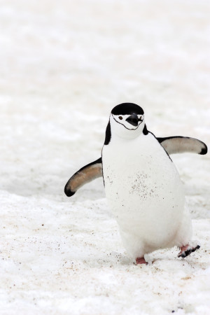 happy penguin beats winter blues