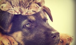 dog, kittens, mindful pet ownership