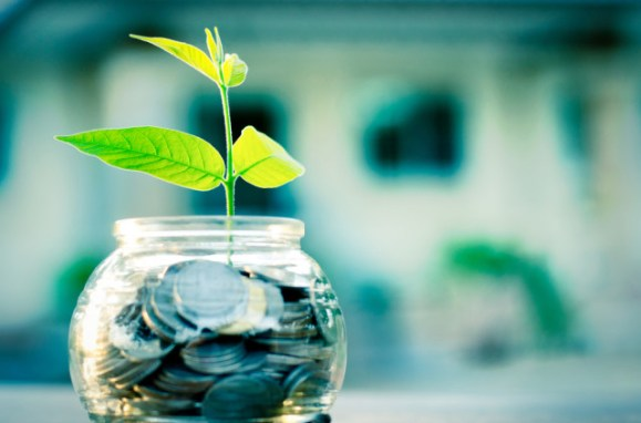 green money saving, plant in coins