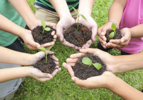 gardening with children, hands holding seedlings
