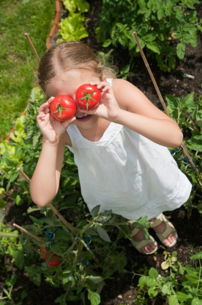 tomatoes are just one vegetable to plant with kids