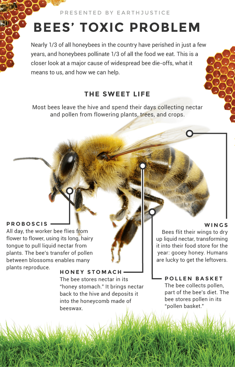 earthjustice bees infographic