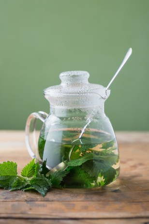 nettle tea allergy remedy