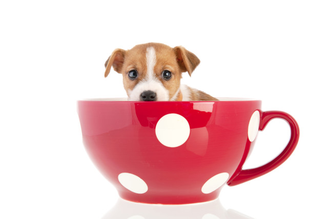who doesn't love puppies and coffee?