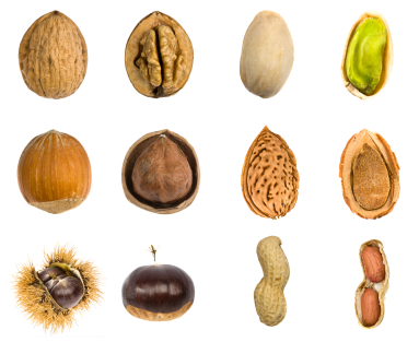 nut fruit isolated composition