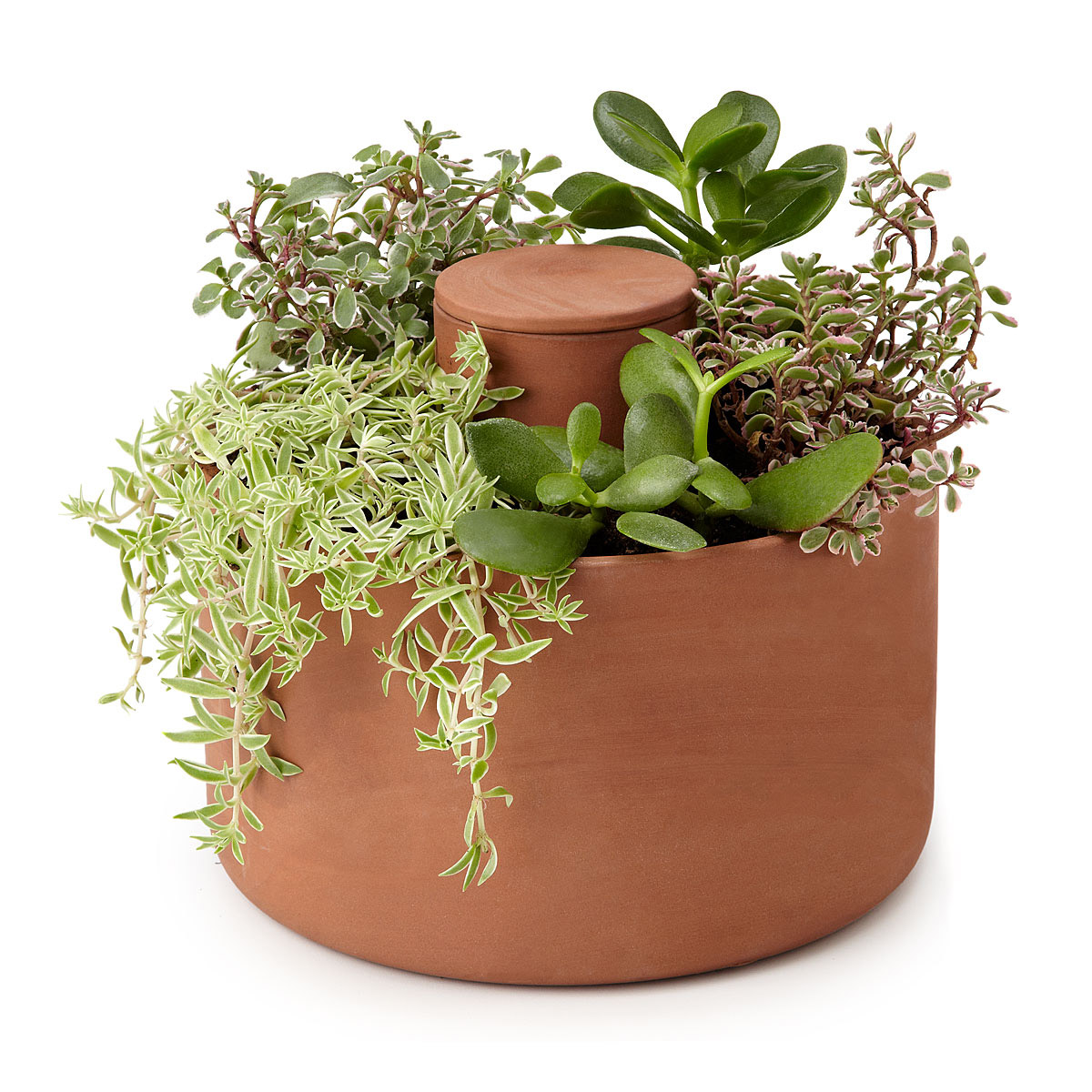 Herb Planter Pot Self Watering Herb And Succulent Planter The Green Head