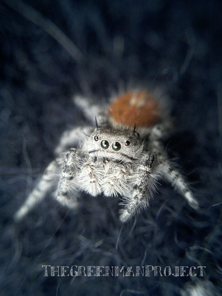 Picture This: Macro Spider