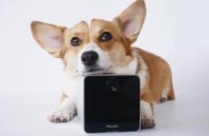 camara-app-para-hablar-con-perro