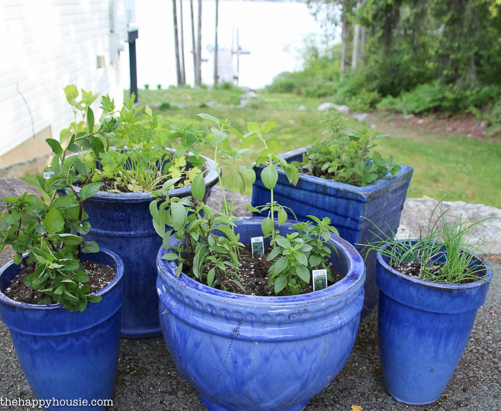 Easy Diy Kitchen Herb Garden In Deck Pots The Happy Housie