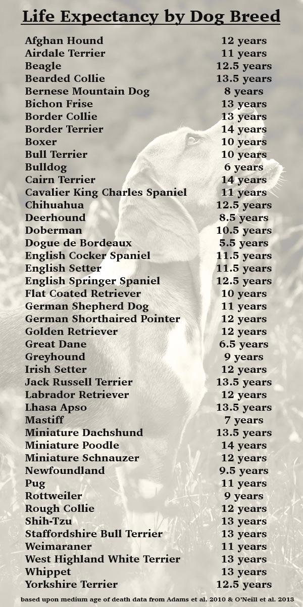 Image For Dogue De Bordeaux Life Expectancy