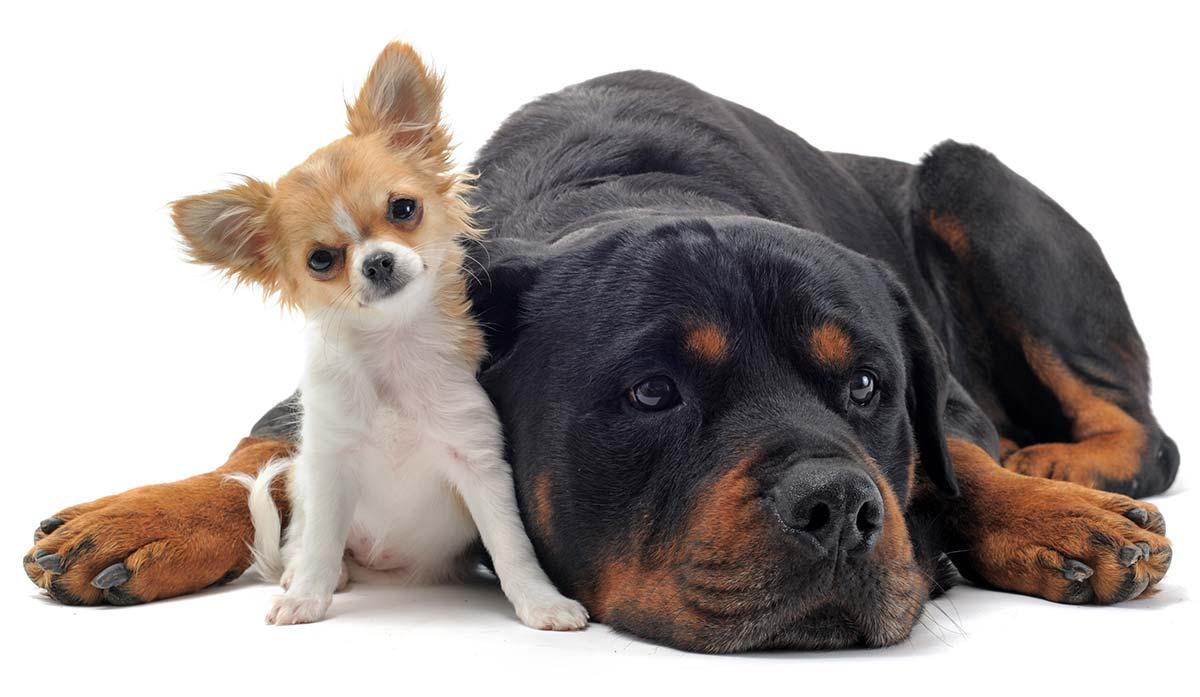 Image For Top Medium Sized Dog Breeds