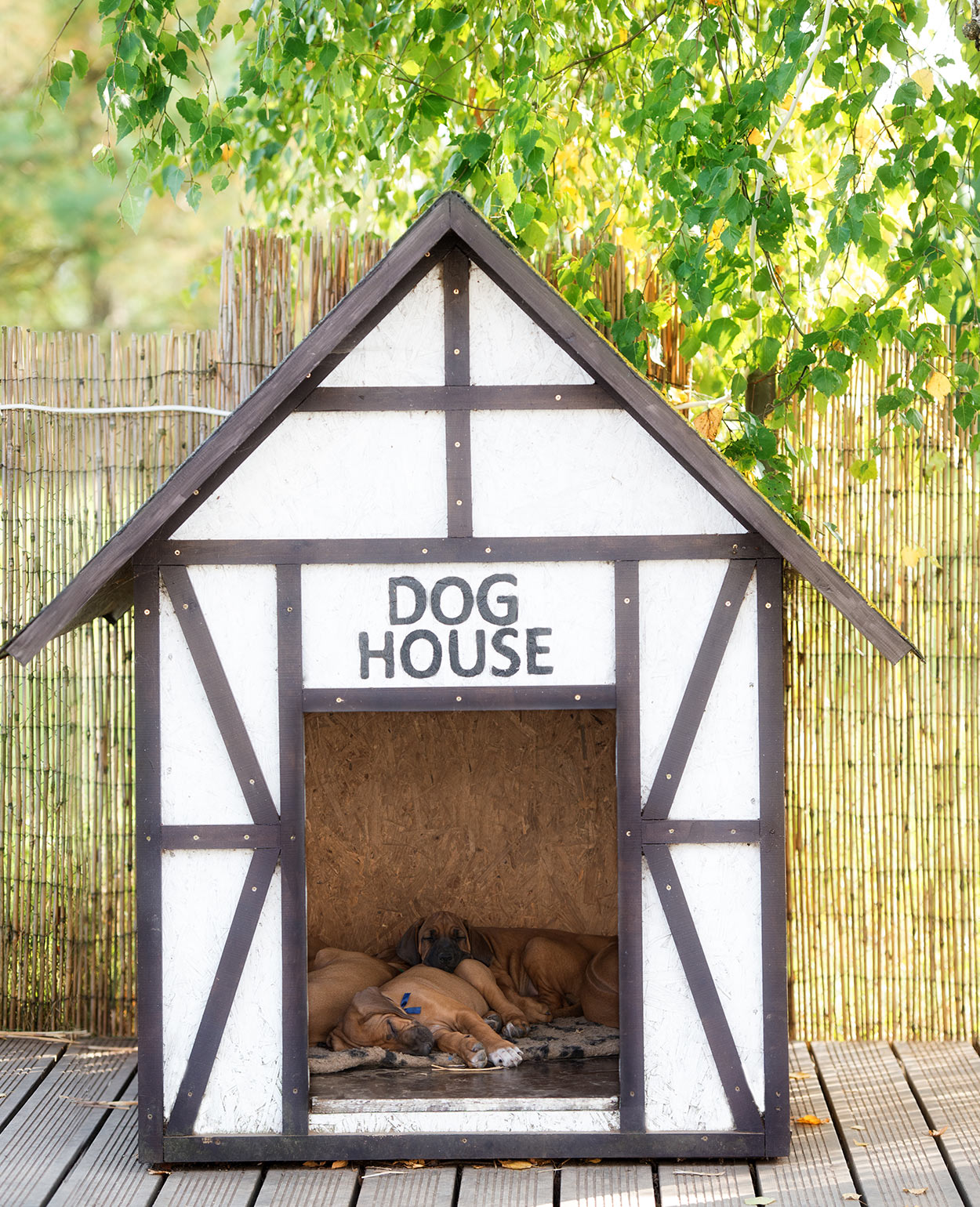 Dog House Guide To The Best Indoor And Outdoor Dog House Heater Options