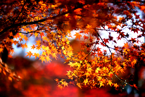 Fall Leaves Wallpaper Free We Heart It The Heart Of Lola