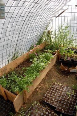 Small Of Cattle Panel Greenhouse