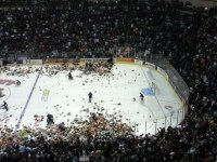 Hershey Bears' fans throw Teddy Bears on the ice after the team's first goal on December 1st. (Matthew Speck/The Hockey Writers)
