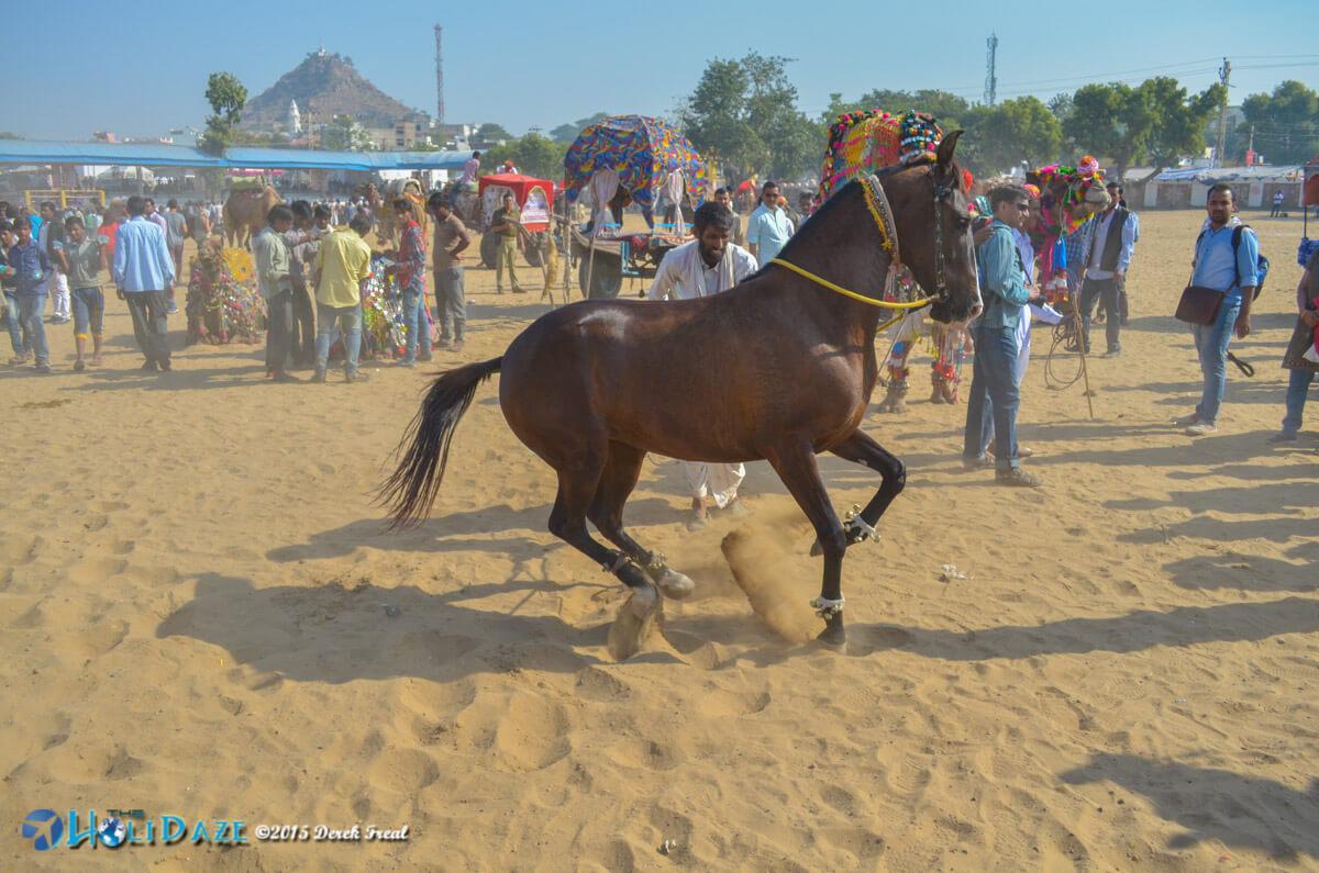 Music performers at the Pushkar Camel Fair 2015