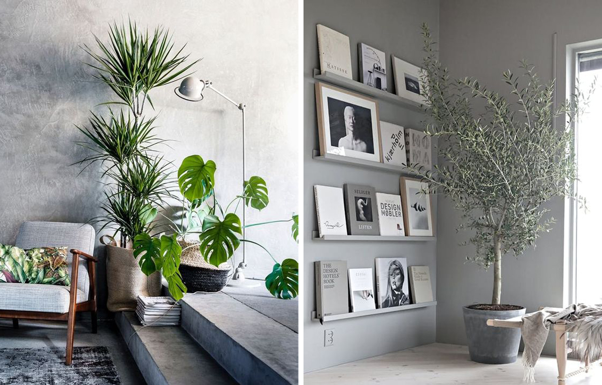 Best Interior Plants Our Favourite Indoor Plants The Home Studio Interior