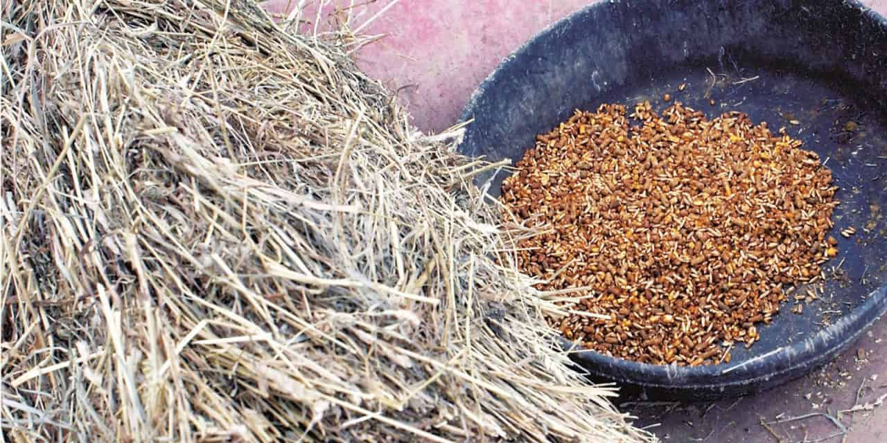 Feed Hay Formulating Equine Diets The Horse