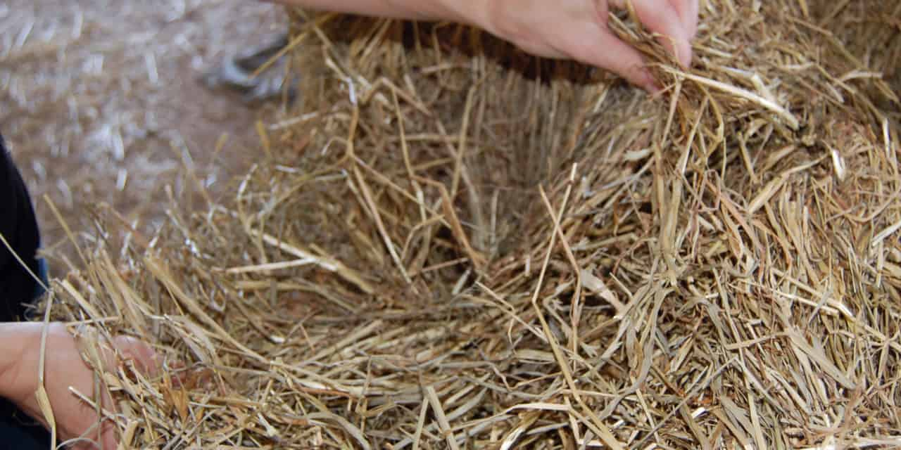 Feed Hay Relative Feed Value Of Hay The Horse
