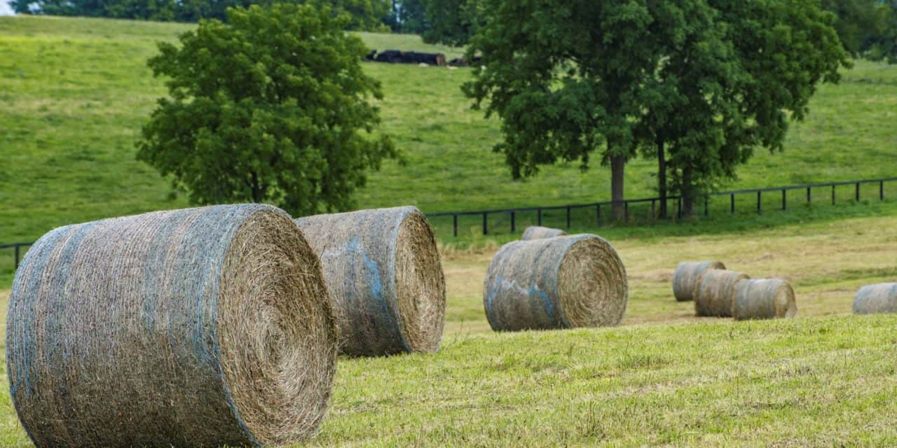 Feed Hay Selecting Horse Hay Separating Fact From Fiction The Horse