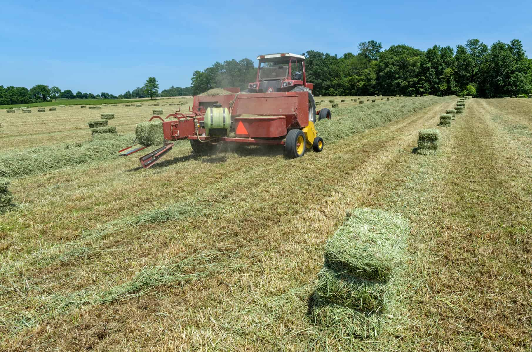 Feed Hay Is It Safe To Feed Moist Hay To Horses The Horse