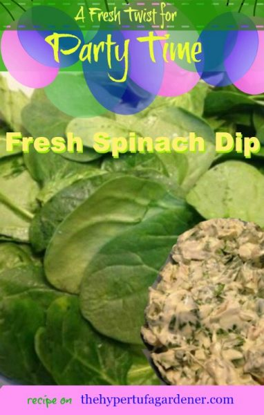 Knorr Spinach Dip - Try it this new way! Recipe on The Hypertufa Gardener