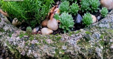 How To Grow Moss On Your Hypertufa Pots!