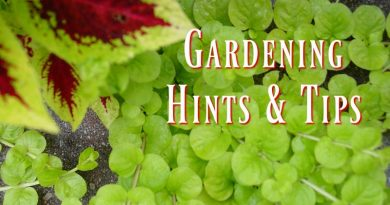 Gardening in November – Hints & Tips